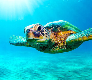 Bahamas Snorkeling Tours