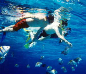 Top 5 Brands for Bahamas Snorkeling