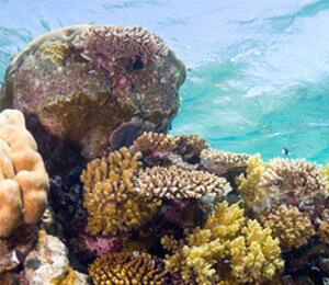 Bahamas Coral Reefs