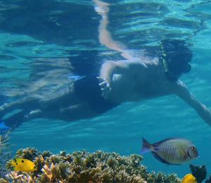 Bahamas Snorkeling Basics