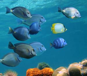 Bahamas Snorkeling Reef Fish