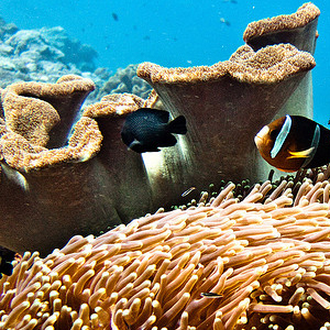 Coral Reef Threats