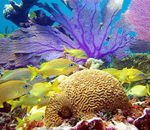 Reasons to Go Snorkeling in Freeport