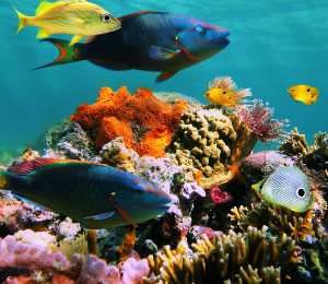 Two Eco-Friendly Tips for Bahamas Snorkeling